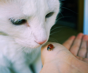 cat, animal, and ladybug image