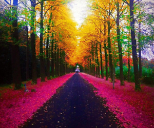 nature, trees, and pink image