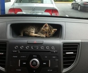 cat, car, and kitty image