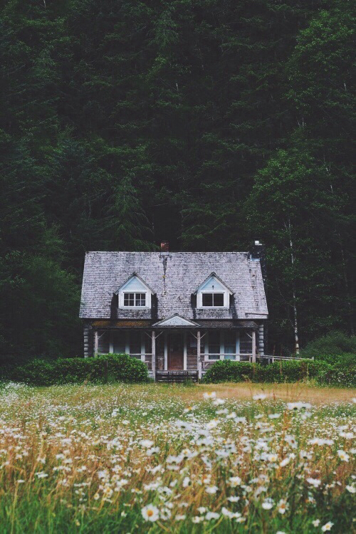 beautiful, hipster, and nature image
