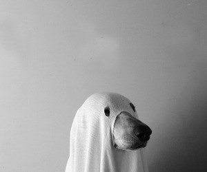 animals, black and white, and Halloween image