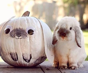 bunny, costume, and pumpkin image