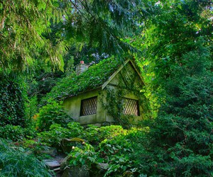 Dream, wood, and green image