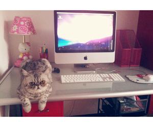 cat, gato, and hello kitty image