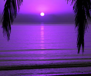 purple and sunset image