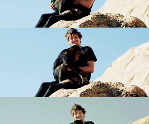 Hot, louis, and monkey image