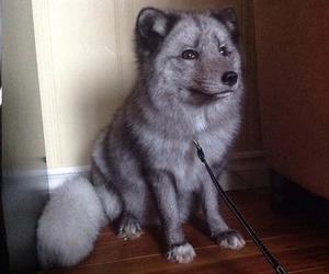 breed, cute dog, and dog image