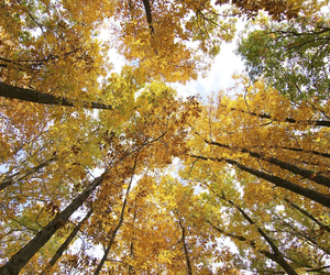 autumn and forest trees image
