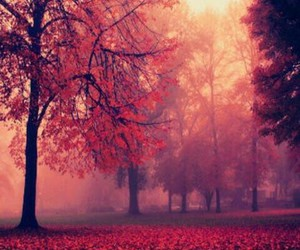 autumn, trees, and red trees image