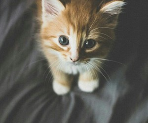 animal, beatiful, and cute image
