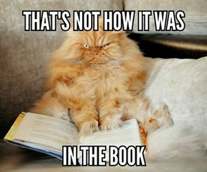 book, funny, and cat image