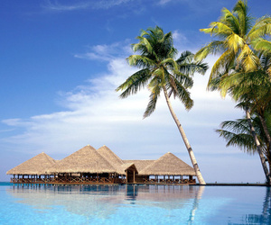 luxury, ocean, and palm tree image