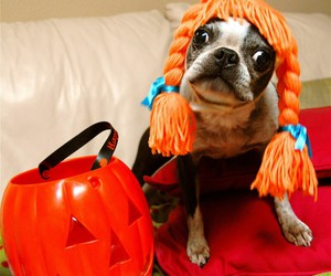 Halloween and dog image