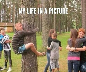 funny, tree, and lol image