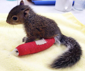squirrel, adorable, and animal image