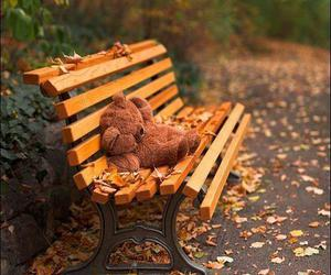 autumn, bear, and leaves image