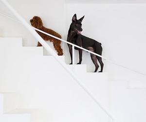 decor, dog, and pet image