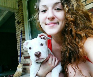 puppy dog pit bull cute image
