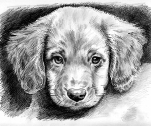 dog, puppy, and drawing image