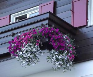 balcony, decoration, and flowers image