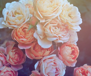 floral, flowers, and vintage image