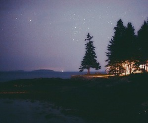 night, tree, and nature image