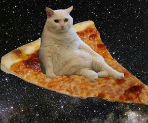 cat, pizza, and space image