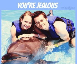 dolphin and dylan image