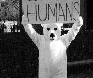 humans, bear, and save image