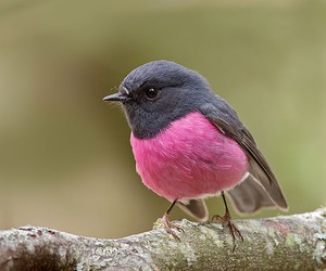 bird, pink, and nature image