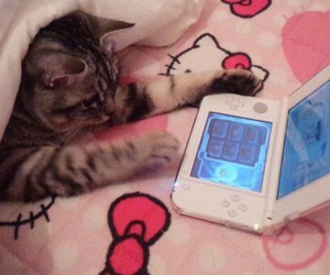 cat, pink, and psp image
