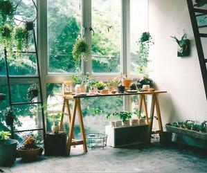 flores, paz, and Estudio image