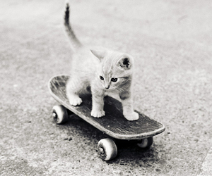 black and white, chat, and skateboard image