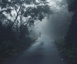 alone, fog, and forest image