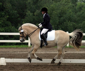 dressage, equestrian, and equitation image