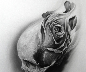 rose and skull image