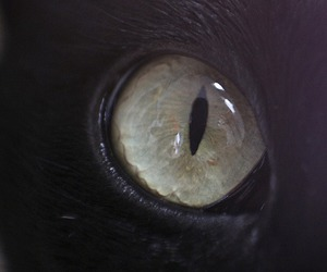 cat, eye, and black image