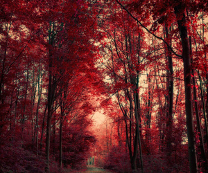 tree, red, and forest image