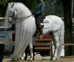 beauty, equestrian, and equine image