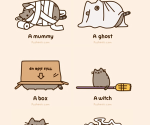 cat, pusheen, and cute image