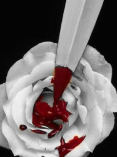 Download Bleeding Rose Wallpapers To Your Cell Phone