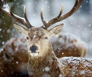 deer, animal, and horn image