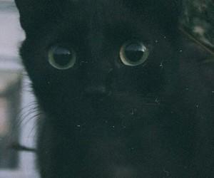 cat, black, and grunge image