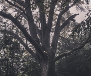 tree, kpop, and wallpaper image
