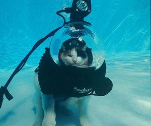cat and underwater image