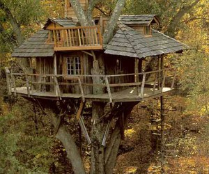 tree, treehouse, and house image