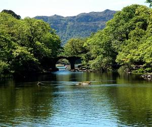 beautiful, ireland, and killarney national park image
