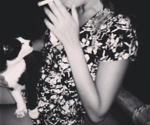 black and white, cat, and life image