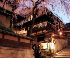 cherry blossom, japan, and street image