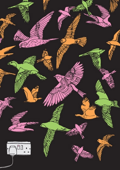birds and illustration image